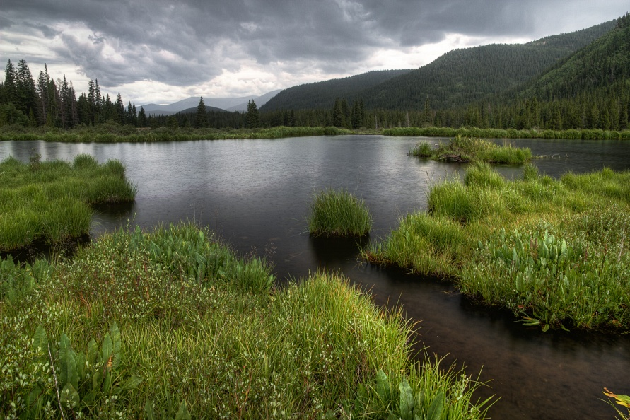 Geneva Creek Beaver Pond in the Rain.jpg