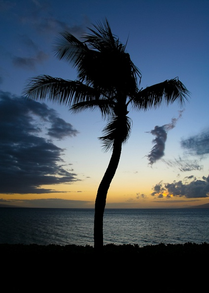 Sunset Palm #4.jpg